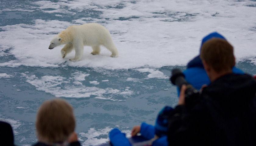Polar bear tour