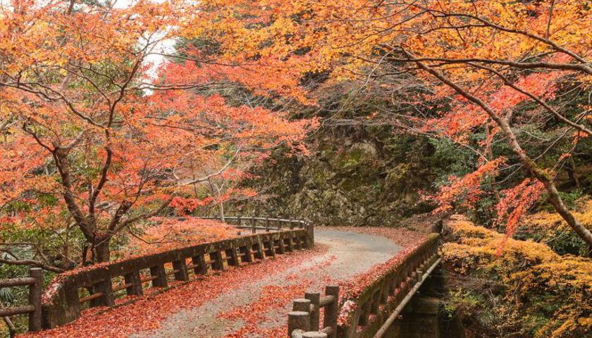 Shikoku Island Cycling Tour