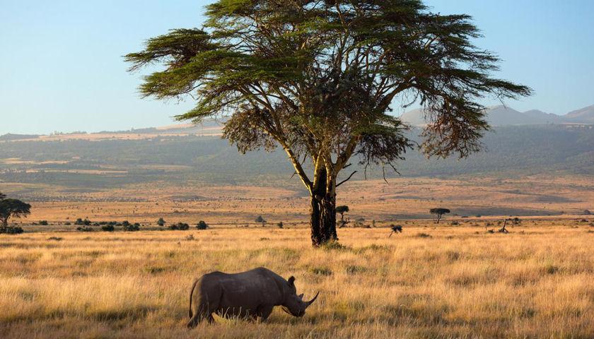 Lewa Rhinos