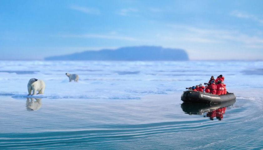 spitsbergen polar bears