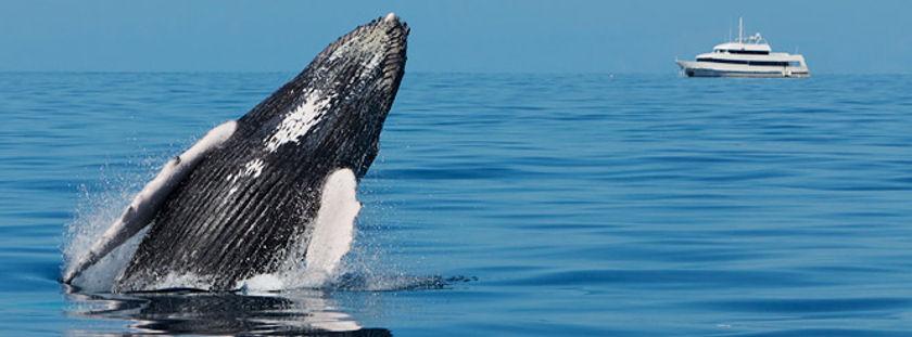 Dominican Republic whale