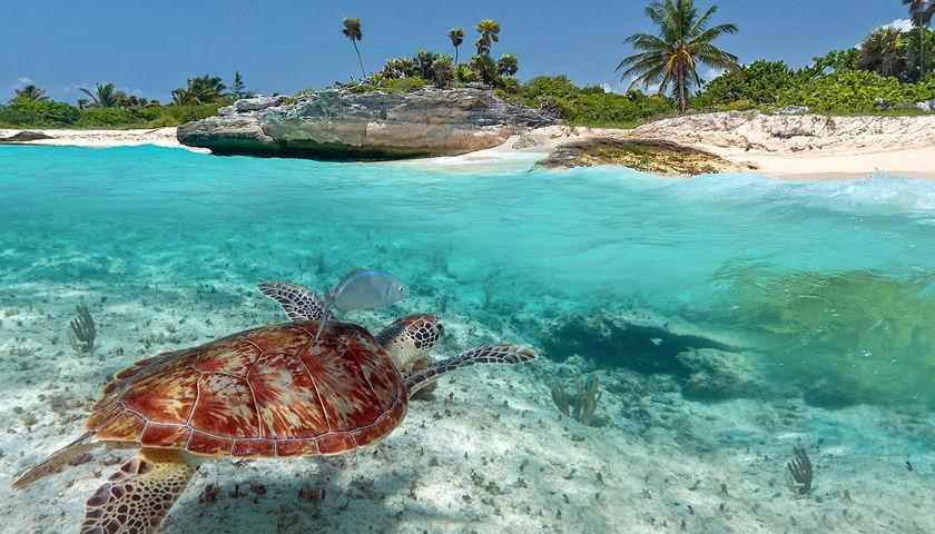 Vanuatu snorkeling