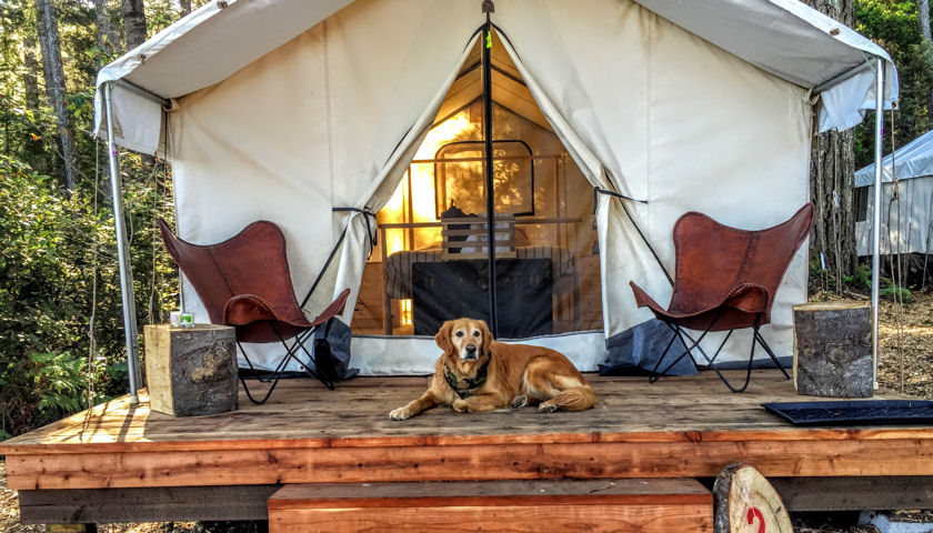 Mendocino Grove tent with dog