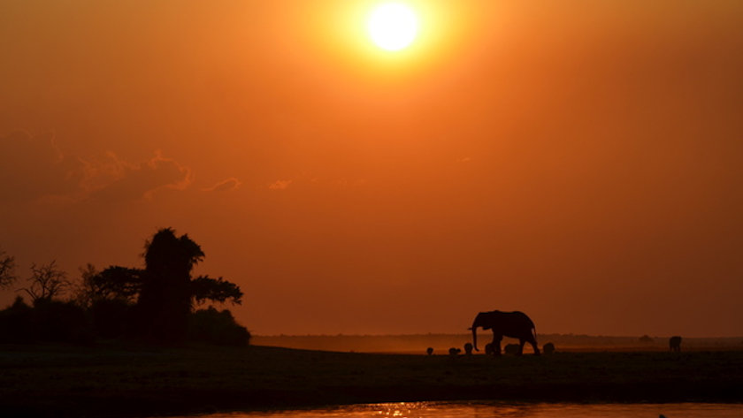 Botswana elephant sunset