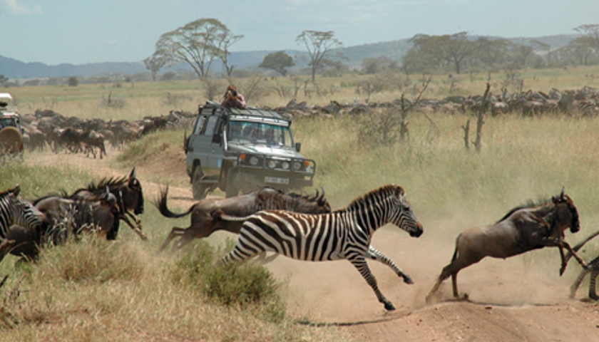 Great Migration Photo Credit Ron Magill