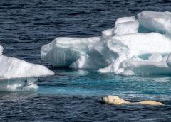 Explore the Arctic's Franz Josef Land Archipelago with Poseidon Expeditions