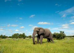 Natural Habitat Adventures Adds Remote Botswana Adventure