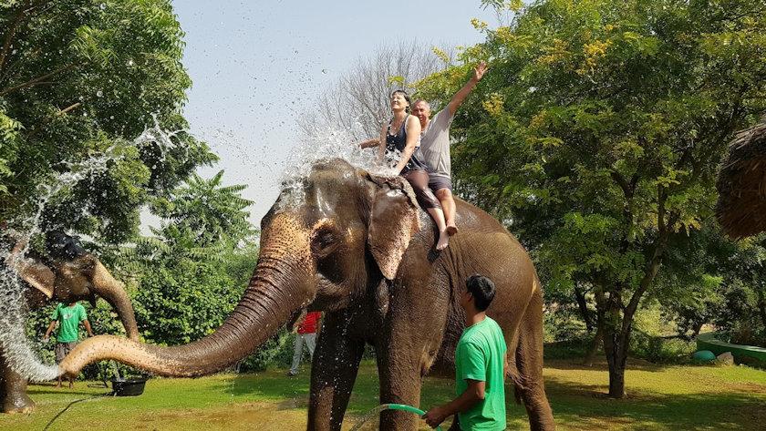 elephant riding India