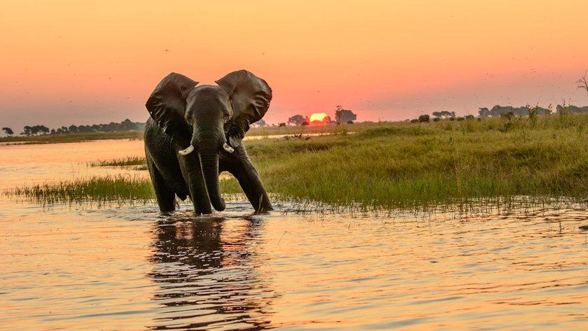 Exodus Bostwana elephant