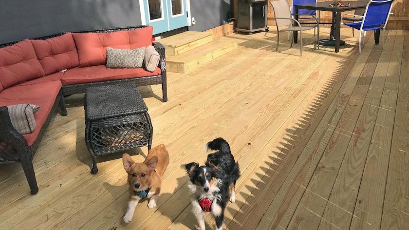 dog friendly Tiny House Resort