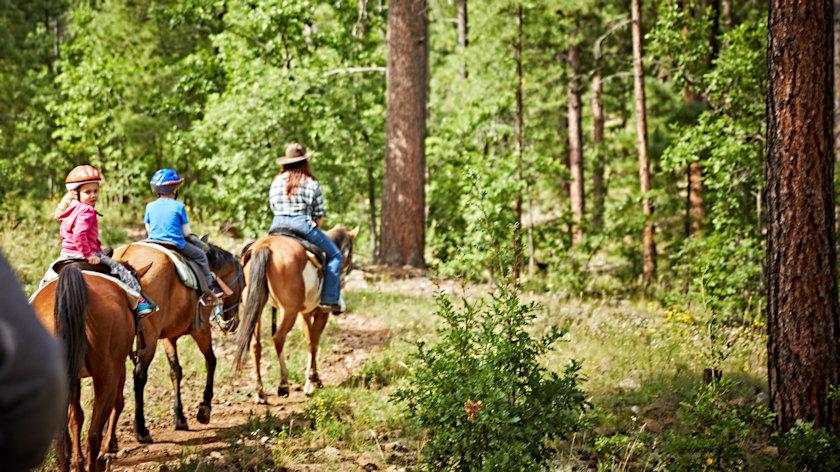 Mormon Lake Lodge horses
