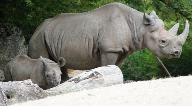 You Can Now See the Critically Endangered Black Rhino in Malawi