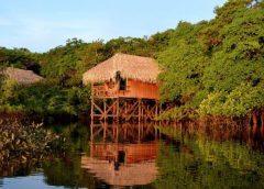 Practical Biology Lessons in the Heart of the Amazon