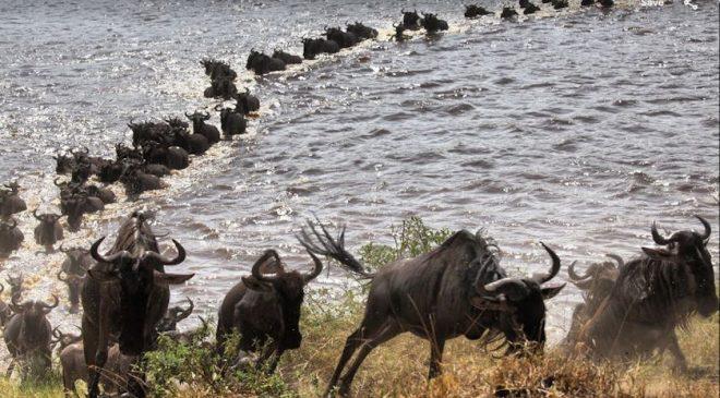 10-Day Tanzania Great Migration Camping Safari
